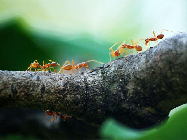 Ants Pretoria