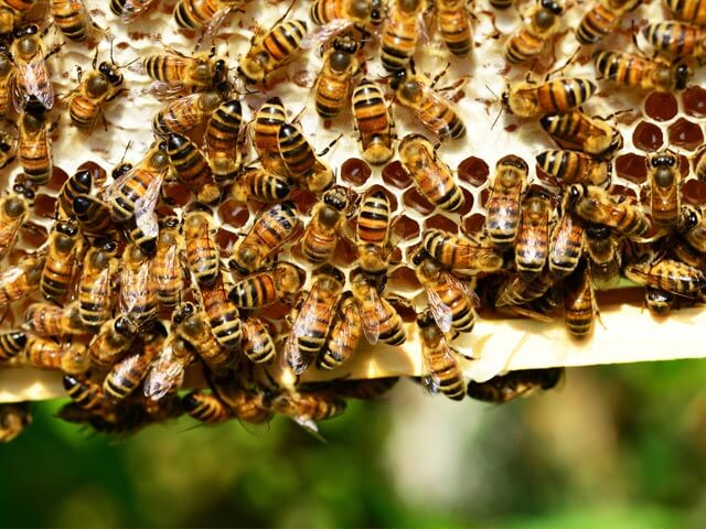 Bee Removals Johannesburg