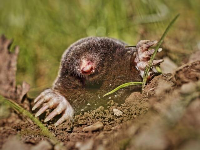 Moles Cape Town
