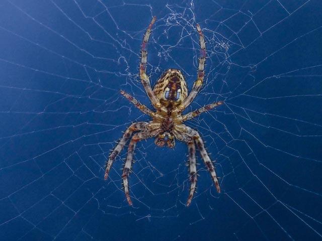 Spiders Johannesburg