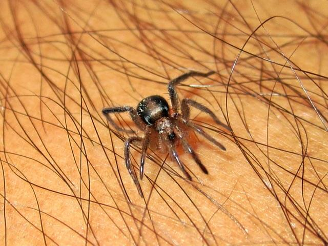 Spiders Boland
