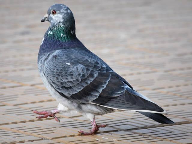 Bird Control Johannesburg