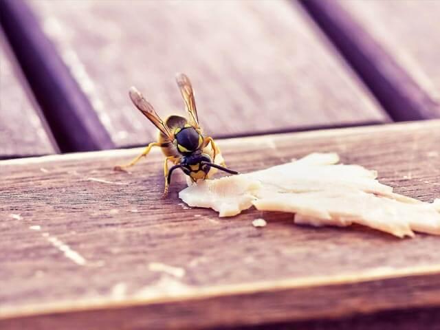 Wasps Boland