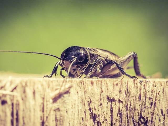 Wood Beetles Boland