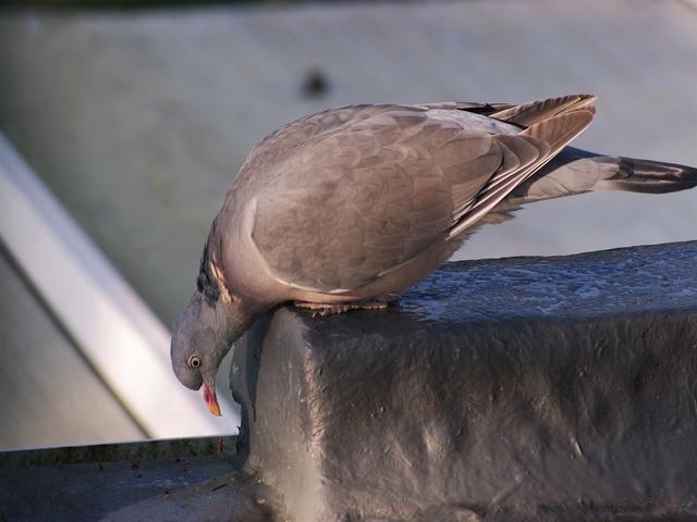 Bird Control Pretoria