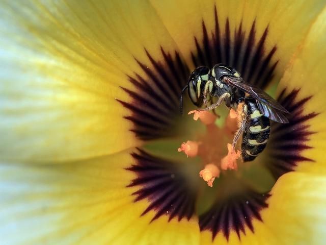 Wasps Durban