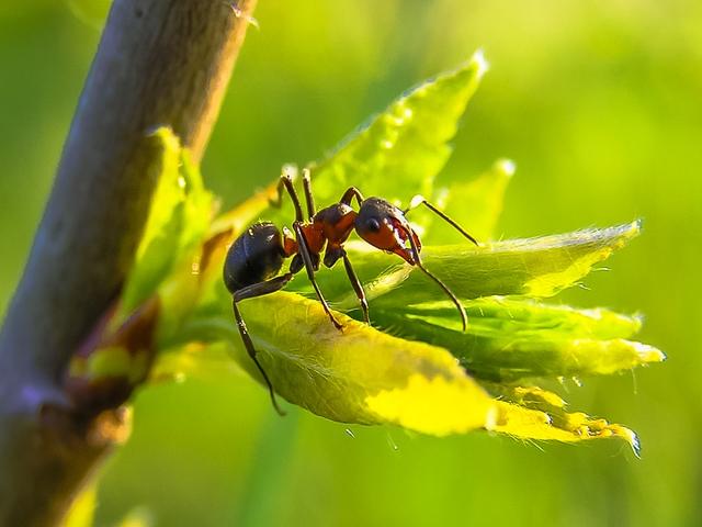 Ants Durban